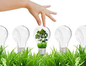 Wallpaper Creative Fingers Hands Light bulb Grass Trees Nature