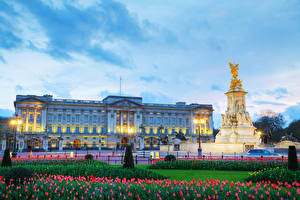 Fotos England Abend Denkmal Tulpen Himmel London Palast Straßenlaterne Buckingham palace