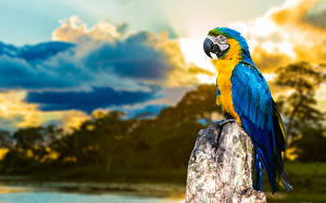 Fotos Papagei Vogel Eigentliche Aras