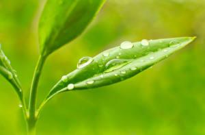 Image Plants Closeup Macro Drops Foliage Nature