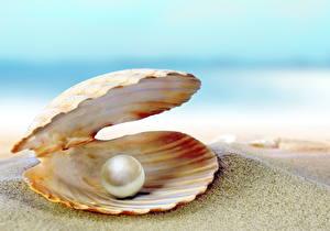 Hintergrundbilder Muscheln Perlen Großansicht Sand Natur