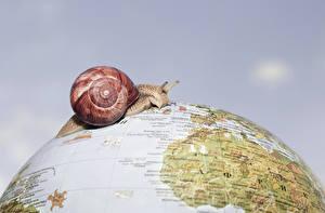 Hintergrundbilder Schnecken Großansicht Globus Tiere