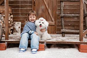 Bilder Winter Hunde Kleine Mädchen Lächeln Bologneser Sitzen Lachen Kinder
