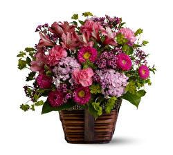 Papel de Parede Desktop Buquês Asters Alstroemeria Dianthus Hydrangea Fundo branco Cesta de vime flor