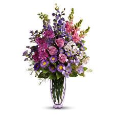 Bilder Blumensträuße Astern Chrysanthemen Freesie Rose Weißer hintergrund Vase Blüte