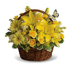 Hintergrundbilder Blumensträuße Lilien Rosen Gerbera Weißer hintergrund Weidenkorb Gelb Blumen