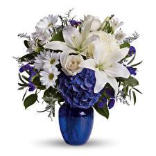 Hintergrundbilder Sträuße Rosen Lilien Chrysanthemen Weißer hintergrund Vase Blumen