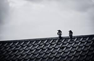 Bilder Krähen Vogel Dach Zwei Tiere