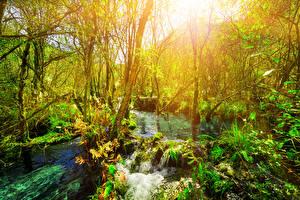 Fotos Jiuzhaigou park China Park Bäume Ast Bach Natur