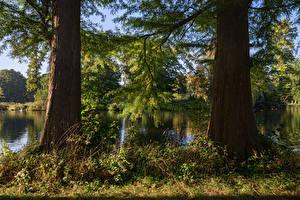 Bilder Niederlande Park Teich Baumstamm Ast De Haar Castle Park Natur