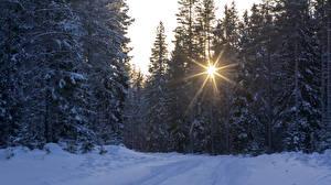 Papel de Parede Desktop Estação do ano Invierno Florestas Neve Raios de luz Picea Naturaleza