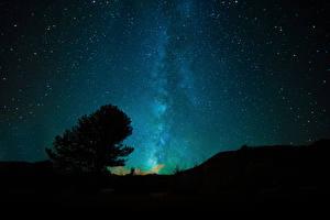 Hintergrundbilder Himmel Stern Nacht Bäume
