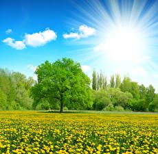 Fotos Sommer Acker Löwenzahn Himmel Bäume Sonne Lichtstrahl Natur