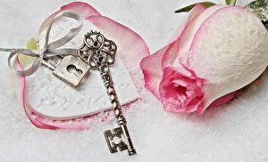 Hintergrundbilder Valentinstag Rosen Großansicht Schlüssel Band Blüte
