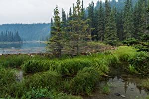 Hintergrundbilder Alaska Park See Fichten Gras Denali National Park Horseshoe Lake Natur