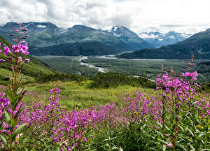 Pictures Alaska Scenery Mountains Grasslands Seward Nature