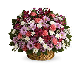 Papel de Parede Desktop Buquê Crisântemos Dianthus Fundo branco Cesta de vime flor