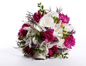 Bilder Blumensträuße Freesie Hortensien Weißer hintergrund Blumen