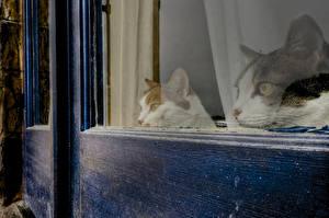 Hintergrundbilder Katze Fenster Blick Zwei Tiere
