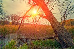 Sfondi desktop Alba e tramonto Tronco d'albero Palude Erba Il Sole Natura