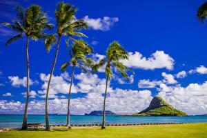 Pictures Tropics Coast Sky USA Hawaii Palm trees Clouds Nature