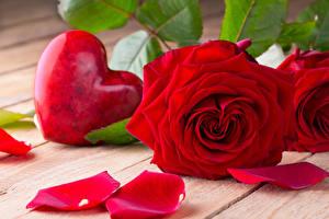 Hintergrundbilder Valentinstag Rosen Hautnah Bretter Rot Herz Blütenblätter Blüte