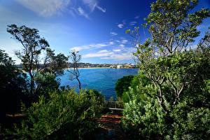 Fotos Australien Flusse Himmel Sydney Strauch Bäume Natur
