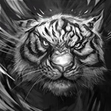 Picture Big cats Tigers Painting Art Black and white Snout Whiskers Staring Displeased Animals Fantasy