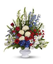 Bilder Sträuße Chrysanthemen Rosen Löwenmäuler Nelken Weißer hintergrund Vase