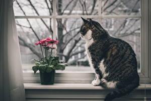 Bilder Hauskatze Fenster Tiere