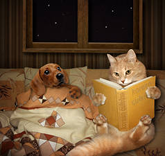 Wallpaper Creative Cat Dog Books Animal Animals