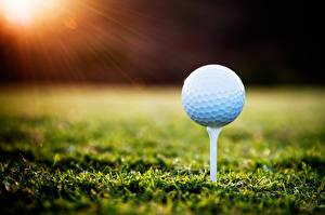 Fotos Golf Großansicht Ball Gras sportliches