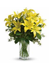 Bilder Lilien Weißer hintergrund Vase Gelb Blüte