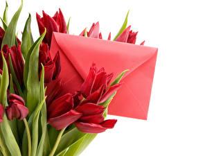 Hintergrundbilder 8 März Tulpen Brief Weißer hintergrund Blüte Blumen