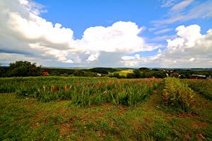 Hintergrundbilder Niederlande Acker Löwenmäuler Himmel Wolke Natur