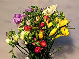 Hintergrundbilder Blumensträuße Freesien Blumen