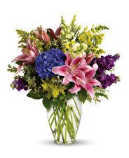 Fotos Sträuße Lilien Hortensie Rittersporne Weißer hintergrund Vase Blumen