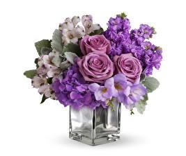 Hintergrundbilder Sträuße Rosen Alstroemeria Löwenmäuler Hortensien Weißer hintergrund Vase