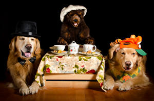 Images Dogs Teddy bear Drinks Black background Retriever Two Hat Cup Animals