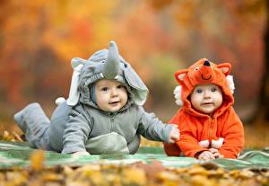Picture Elephants Foxes Infants Uniform Staring 2 Children