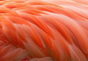 Bilder Federn Flamingos Makro Orange