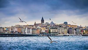 Bakgrundsbilder på skrivbordet Istanbul Turkiet Byggnader Flod Mås Broar Fartyg