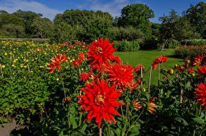 Bilder Schweden Park Dahlien Sofiero Castle Gardens Helsingborg Natur