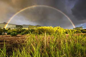 Bureaubladachtergronden Tropisch Hemelgewelf Struiken Gras Regenboog Mauritius