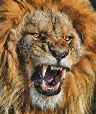 Photo Big cats Lions Canine tooth fangs Closeup Painting Art Snout Roar Staring Animals