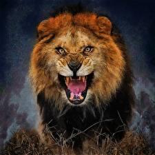 Pictures Big cats Lion Roar animal