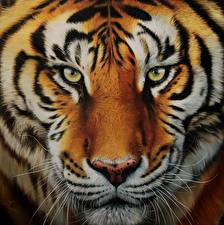 Pictures Big cats Tigers Painting Art Closeup Snout Glance Whiskers animal