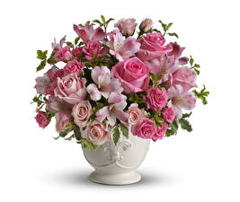 Wallpapers Bouquets Roses Alstroemeria White background Vase flower