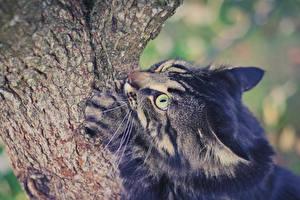 Hintergrundbilder Katze Rinde Ein Tier Tiere