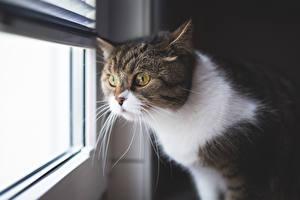Hintergrundbilder Katzen Fenster Starren Schnurrhaare Vibrisse Tiere